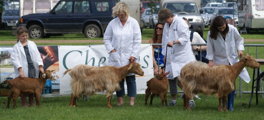 Mother and daughter goats at 2012 Royal Norfolk Show